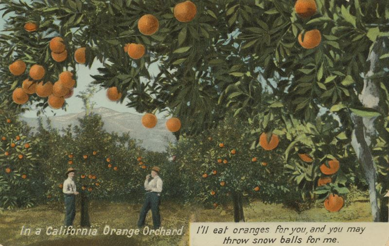 California orange orchard (1905) Courtesy of Orange Public Library and History Center